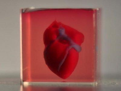 3D print of a heart